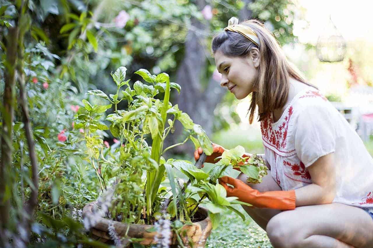tưới tiêu tự động khu vườn nahf bạn